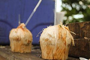 coconut300x200